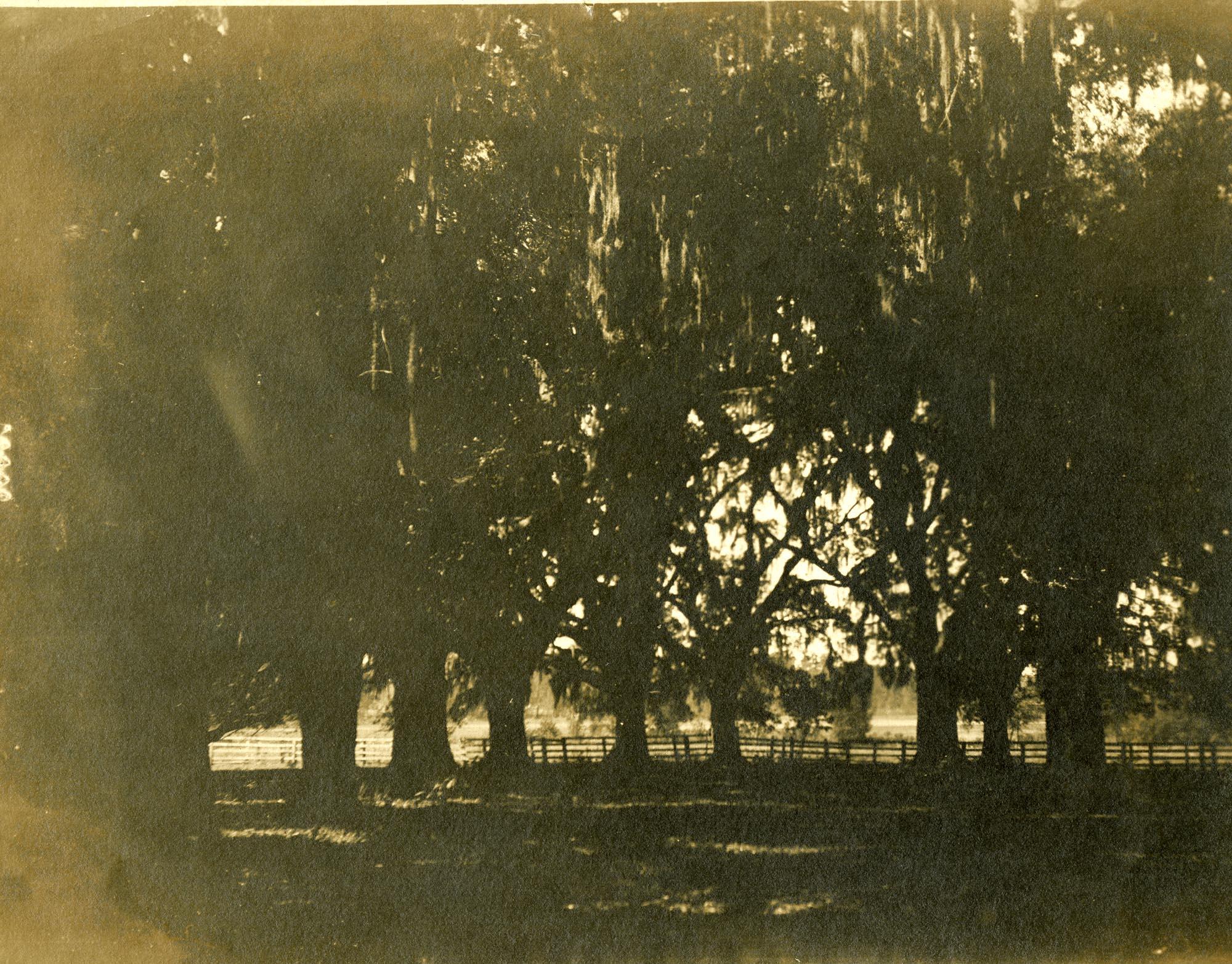Plantations, Tomotley Plantation