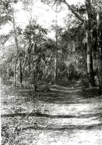 Plantations, Chicora Wood