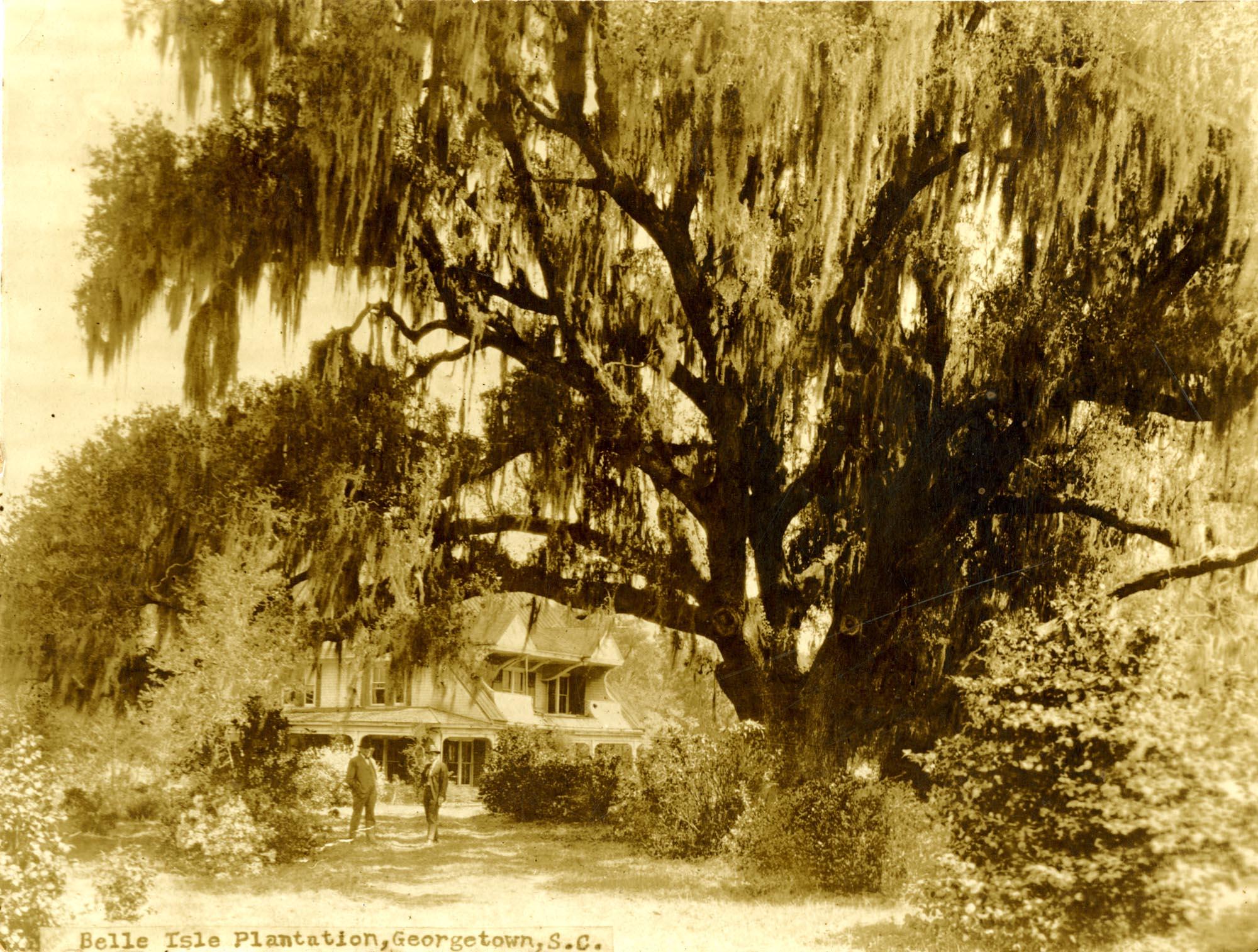 Plantations, Belle Isle