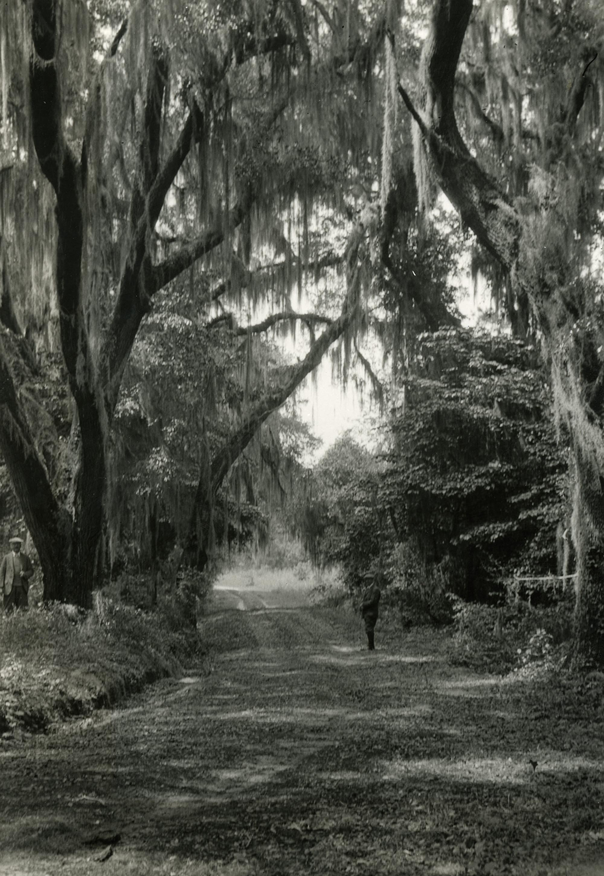 Plantations, Yeamans Hall Plantation